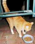 orange cat found in terryville ct