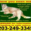 cat lost in oxford, ct