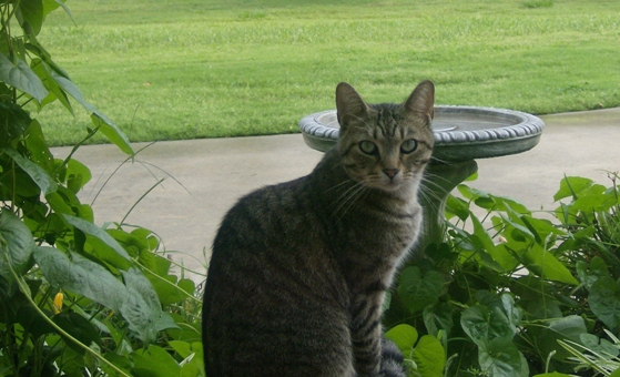 lost cat in plainville,massachusetts